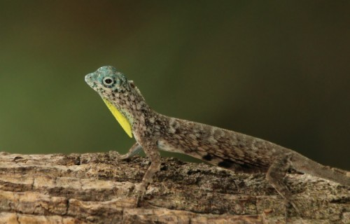 Astounding Lizards of the World