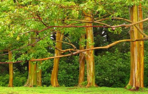 5 Incredibly Wonderful Trees
