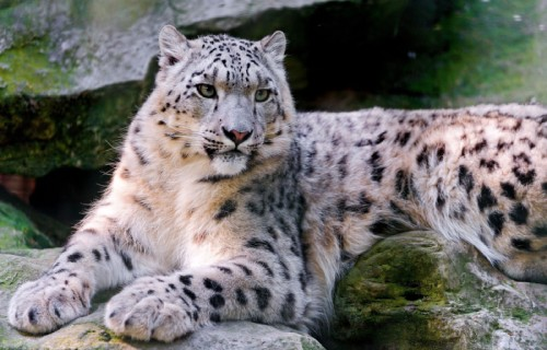Wonderful Wild Cats of the World