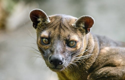 Madagascar's Astounding Inhabitants