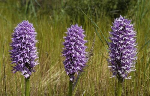 7 Stunning European Flowering Plants