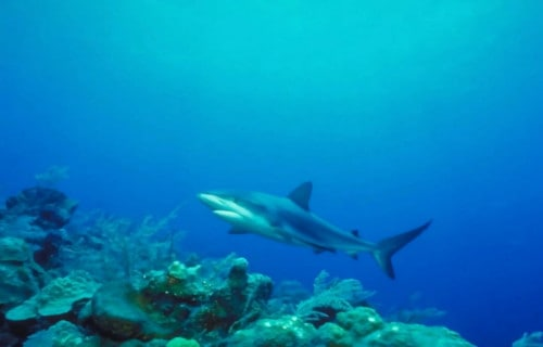 Incredible Sharks of the World