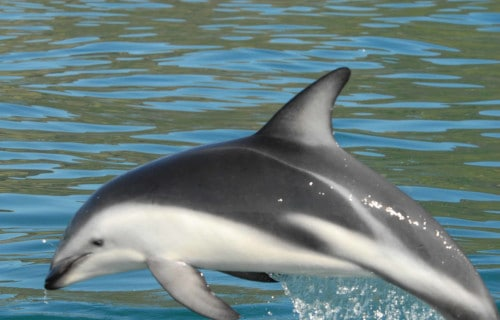 Spectacular Dolphins Throughout Our World