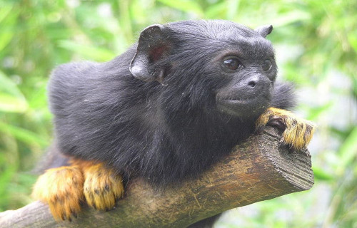 Breathtaking Primates of the World