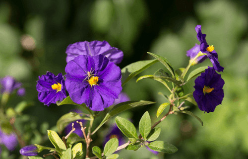 7 Herbaceous Plants of Central America