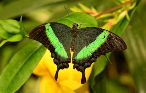 4 Magnificent Malaysian Insects