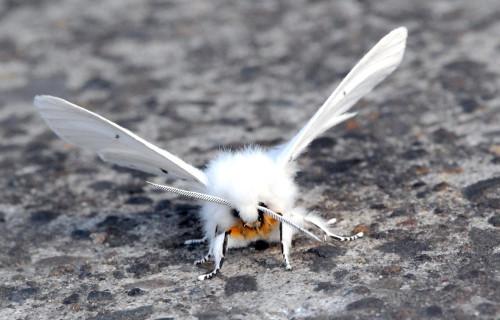 Earth's Many Magical Moths